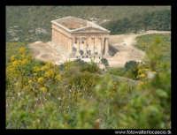Il tempio.  - Segesta (4903 clic)