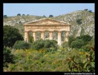 Il tempio.  - Segesta (3861 clic)