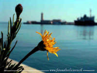 Un fiore che sboccia tra i massi del porto di Marsala.  - Marsala (4365 clic)