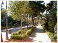 Villa Amedeo (Villa Isabella). Viale pricnipale della villa.   - Caltanissetta (8536 clic)