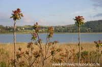 Lago di Pergusa(EN).  - Pergusa (4325 clic)