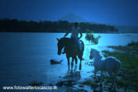 Lago di Pozzillo, Regalbuto, Cavalli al lago.  - Regalbuto (3243 clic)