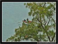 Isolabella: Pescatore tra i rami.  - Taormina (2916 clic)