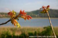 FIORI AL Lago di Pergusa(EN).  - Pergusa (4911 clic)