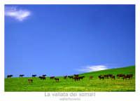Regalbuto. Campagna di Regalbuto vicino il lago Pozzillo. La vallata dei somari! Foto Walter Lo Cascio www.walterlocascio.it  - Regalbuto (2160 clic)