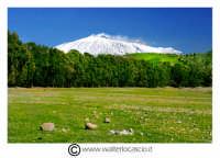 Regalbuto. Campagna di Regalbuto vicino il lago Pozzillo.  Foto Walter Lo Cascio www.walterlocascio.it  - Regalbuto (2642 clic)