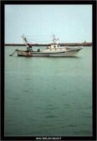 Licata: Porto di Licata. Peschereccio in mare. LICATA Walter Lo Cascio