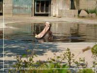 Ippopotamo dormiglione. Parco Zoo di Paterno CT.  - Paternò (21325 clic)