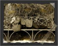 Catania: Dreams of an old man #3, uomo che dorme e sogna. (Realizzazione in post produzione con photoshop con tecnica dell'invecchiamento di una foto). Un anziano vecchietto riposa tranquillamente su di una panchina alla villa BEllini di Catania, sotto il caldo sole di una domenica di Dicembre.   - Catania (7248 clic)
