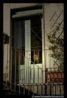 Bronte: Sagra del Pistacchio. Donna dietro il vetro.  - Bronte (3758 clic)