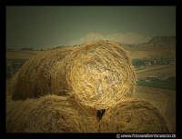 Balle di fieno in campagna.  - Caltanissetta (3336 clic)