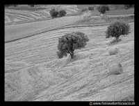 Campagna nissena. Contrada Bulgarella.  - Caltanissetta (3796 clic)