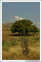 Caltanissetta. Valle dell'Imera. Flora tipica. #2  - Caltanissetta (3236 clic)