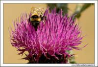 Caltanissetta. Valle dell'Imera. Flora tipica. #5  - Caltanissetta (2986 clic)