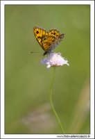 Caltanissetta. Valle dell'Imera. Farfalla su efflorescenza.  - Caltanissetta (3373 clic)
