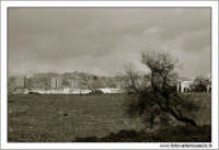 Agrigento. Landscape agrigentino. Bianco e nero  - Agrigento (6562 clic)