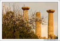 Agrigento. Mandorlo in fiore e tempio di Ercole sullo sfondo.  - Agrigento (4120 clic)