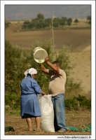 Agira (ENNA). Raccolta delle olive. (foto 2)  30 Ottobre 2005  - Agira (3751 clic)