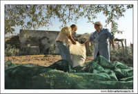 Agira (ENNA). Raccolta delle olive. (foto 4)  30 Ottobre 2005  - Agira (3361 clic)