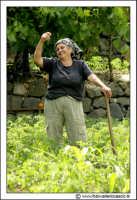 Francavilla di Sicilia. Donna Angelina nei campi.  - Francavilla di sicilia (6168 clic)