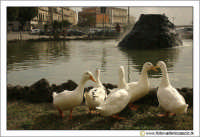 Siracusa - Ortigia - Lungomare: Oche nella fontana di fronte il palazzo delle Poste.  - Siracusa (2954 clic)