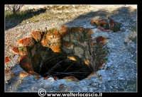 Caltanissetta: Miniera Trabonella. Reportage sulle miniere di zolfo di Caltanissetta. Stabilimenti abbandonati. I Forni  - Caltanissetta (3647 clic)