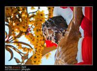 Mazzarino - Festa del SS. Crocifisso dell'Olmo. Signore dell'Olmo. Anno 2010. Foto Walter Lo Cascio. www.walterlocascio.it  - Mazzarino (3868 clic)