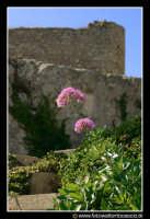 Assoro: Fiori con sfondo del castello federiciano.  - Assoro (3134 clic)