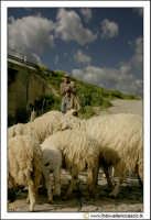 Santa Caterina Villarmosa: Un pastore con il suo gregge. #2  - Santa caterina villarmosa (3711 clic)