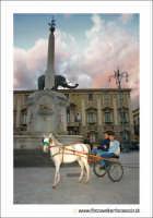 Catania: Pony in Piazza Duomo.  - Catania (2457 clic)