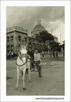 Catania: Pony in Piazza Duomo.  - Catania (2451 clic)