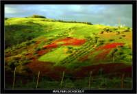 Nissoria. Campagna di Nissoria. Panorama primaverile.  - Nissoria (4511 clic)