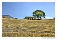Catenanuova: Paesaggio rurale #1.  - Catenanuova (2223 clic)