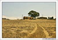 Catenanuova: Paesaggio rurale #2.  - Catenanuova (2168 clic)