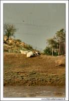 Regalbuto, Settembre 2005. Campagna rurale. Sullo sfondo il lago di pozzillo 2.  - Regalbuto (3144 clic)