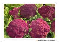 Catania: A fera u luni. Broccoli, brocculi, Vrucculi.  - Catania (2156 clic)