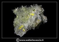 Caltanissetta: Reportage Fotografico sulle miniere. Minerali estratti dalle miniere siciliane. Collezione privata Sig. Gerlando Bennardo.  - Caltanissetta (2944 clic)