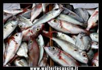 Catania: Pesce fresco al mercato. La Pescheria e' l'antico mercato del pesce della cittý di Catania ed e' inserito nel percorso turistico per il contenuto di folklore che si respira passando fra i banchi dei pescivendoli.   - Catania (2259 clic)