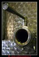 Butera, Feudo Principi di Butera. Fotovendemmia presso il Feudo dei Principi di Butera. 20 Settembre 2009. Foto Walter Lo Cascio www.walterlocascio.it  - Butera (3587 clic)