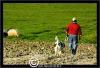 Agira. Campagna di agira. Pastore con il suo cane.  - Agira (1427 clic)