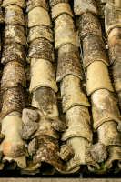 Agira, Agosto 2005. Coppi sicliani sui tetti di agira.  - Agira (2139 clic)