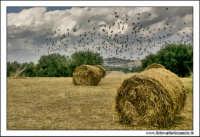 Caltanissetta. Giugno 2005. Campagna nissena. I covoni di paglia. (balle di paglia, di fieno). #2. Stormo d'uccelli neri, com'esuli pensieri nel vesprero migrar... (Giosuè Carducci)  - Caltanissetta (7552 clic)