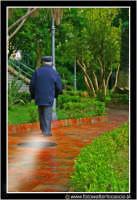 Caltanissetta: Anziano che passeggia alla villa Cordova.  - Caltanissetta (3782 clic)