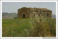 Caltanissetta. Giugno 2005. Campagna nissena. Casa rurale abbandonata.  - Caltanissetta (3161 clic)