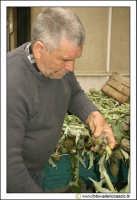 Cerda: Sagra del carciofo 25 Aprile 2005. Venditore di carciofi.  - Cerda (9635 clic)