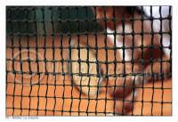 Caltanissetta: Tennis Club Villa Amedeo Caltanissetta. Torneo Internazionale di Tennis Citta' di Caltanissetta FUTURE Xa edizione - 08/16 Marzo 2008, Foto Walter Lo Cascio   - Caltanissetta (1327 clic)