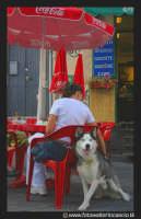 Acicastello: La ragazza e il suo Siberian Husky.  - Aci castello (2849 clic)