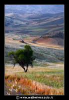 Pietraperzia.  Panorama rurale.  Foto Walter Lo Cascio www.walterlocascio.it  - Pietraperzia (3513 clic)