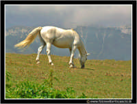 Pianobattaglia: Cavallo al pascolo nei verdi prati estivi.  - Piano battaglia (5845 clic)