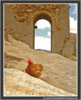 Gagliano Castelferrato: Gallina, Una turista per caso  - Gagliano castelferrato (4033 clic)